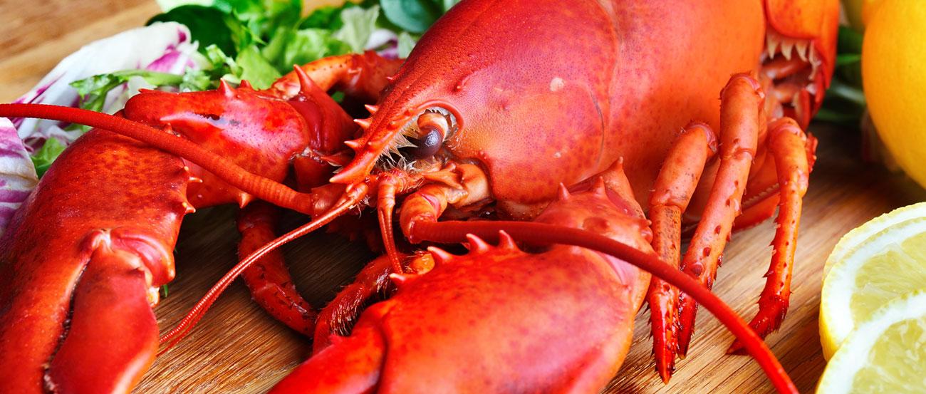 Lobsterfest!