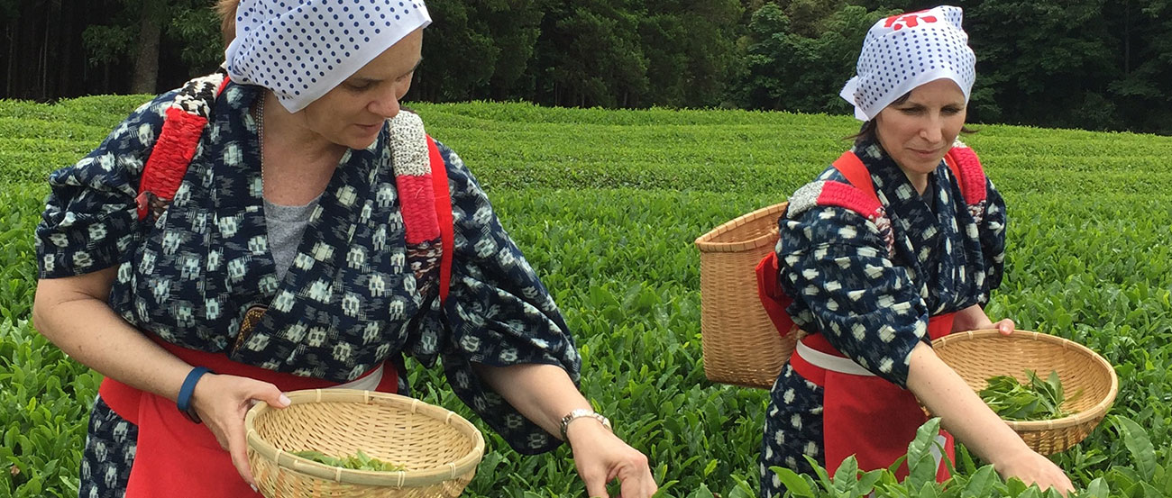 Tea Leaf Picking and Historic Shuzenji Tour