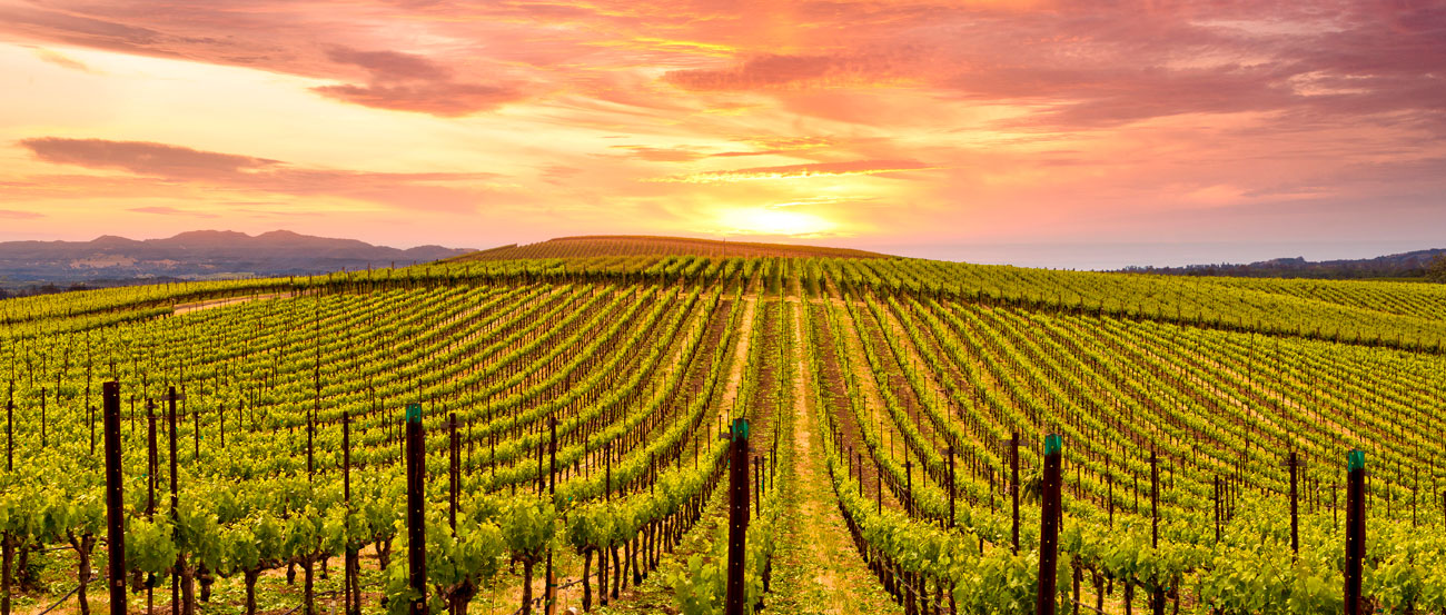 Napa Vintner Wine Dinner